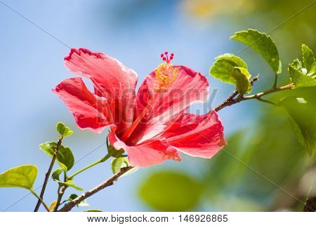 Pink With Yellow Center Flower In A Jungle