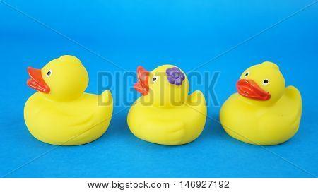 Sweet duck babies
