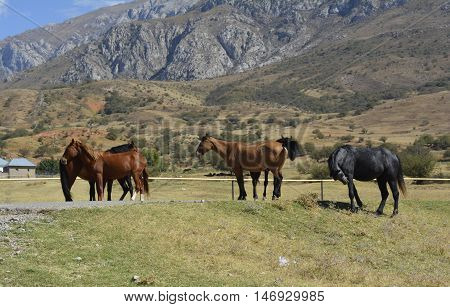 a herd of horses grazing in the foothill pastures