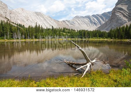 Landscape of one of the four Picklejar Lakes in surrounded by the Rocky Mountains with deadwood in the foreground in Kananaskis Alberta.