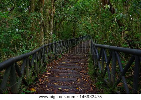 PASTO, COLOMBIA - JULY 3, 2016: nice path in the middle of the jungle located in la cotora island.