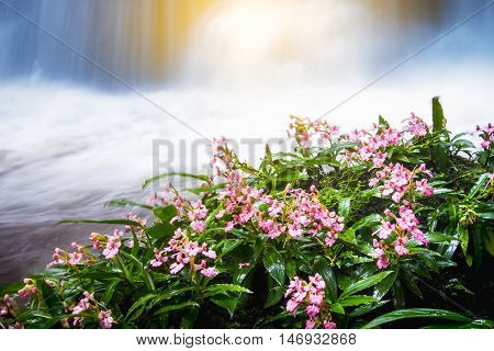 fresh pink flower in front of waterfall in rain forest rainy season