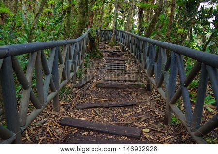 PASTO, COLOMBIA - JULY 3, 2016: wood trail in the middle of the jungle located in la cotora island.