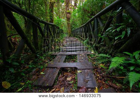 PASTO, COLOMBIA - JULY 3, 2016: wood steps path located in la cotora, small island in la cocha lake.