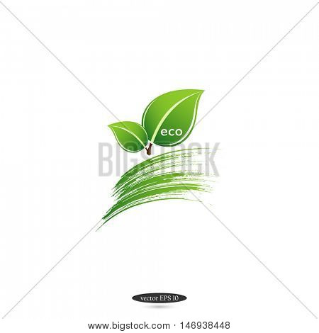 Green eco isolated leaf on a white background. Logo. Vector element for design.