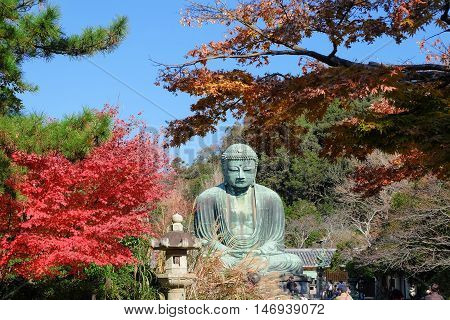 Statue of Amitabha Buddha (Daibutsu) located at the Kotokuin Temple in Kamakura Japan in Autumn season