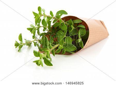 Fresh herbs oregano isolated on white background