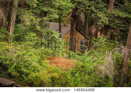 Photo of old wooden house in the forest.
