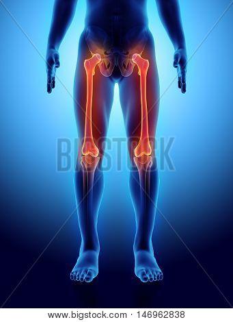 3D Illustration Of Femur, Medical Concept.