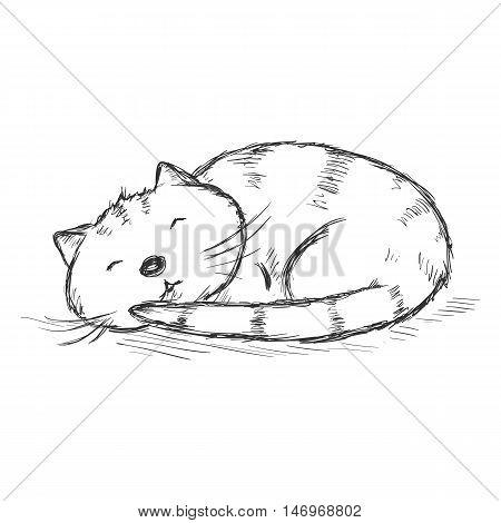 Vector Sketch Character - Funny Sleeping Cat