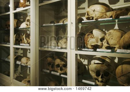 Cupboard Full Of Old Human Skulls