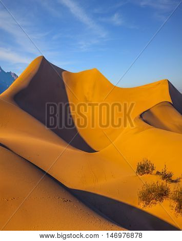 Bright sunny morning in a picturesque part of Death Valley, USA. Mesquite Flat Sand Dunes. Bizarre twists of orange sand dunes