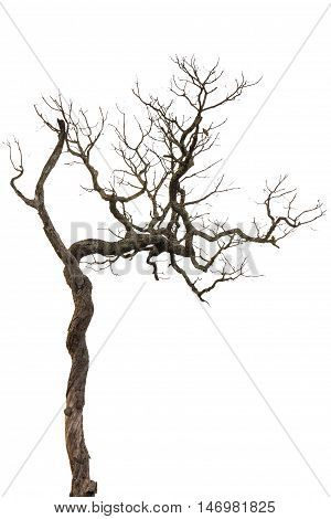 Silhouette Tree Isolated On White Background With Clipping Path