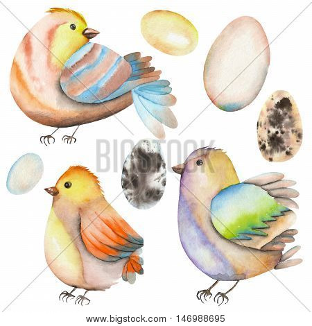 Set, collection of the watercolor birds and eggs, hand drawn isolated on a white background