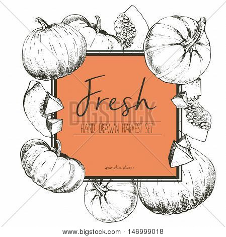 Vector square border color illustration of fresh vegetables. Pumpkin slices. Hand drawn vintage engraved set of vegetarian tasty organic food.