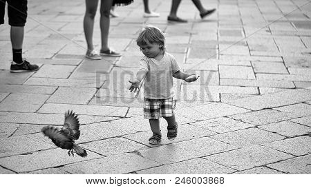 Child Runs After The Pigeon. Photo Closeup Of Cute Fair-haired Blond Kid Tiny Little Child Baby Boy
