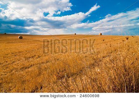 Wheat Camp