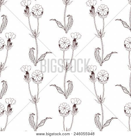 Black And White Seamless Pattern With White Campion Flowers On White Background. Stock Vector Illust