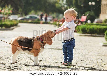 Little Boy Is Feeding The Beagle Dog In The Walking