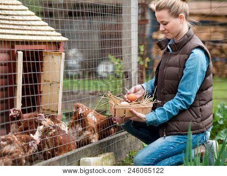 Pretty Girl Farmer Gathering Fresh Eggs Into Basket At Hen Farm In Countryside