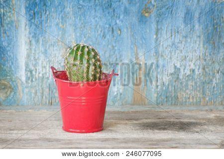 Cactus In Red Pot. Blue Vintage Background