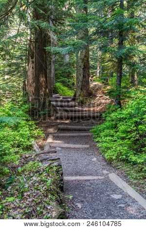 A View Of The Path That Leads To Franklin Falls In Washington State.