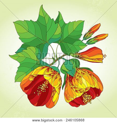 Vector Bouquet With Outline Ornate Abutilon Or Indian Mallow Flower In Orange, Bud And Green Leaf On