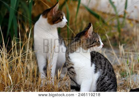 Portrait Of Two Feral Multicolored Cats In The Countryside. Photography Of Nature And Wildlife.