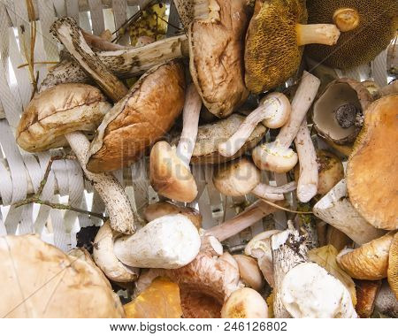 Different Mushrooms In A Basket With Leaves In Autumn