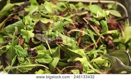 Green And Fresh Lettuce Leaves On The Tray Of A Self Service Restaurant