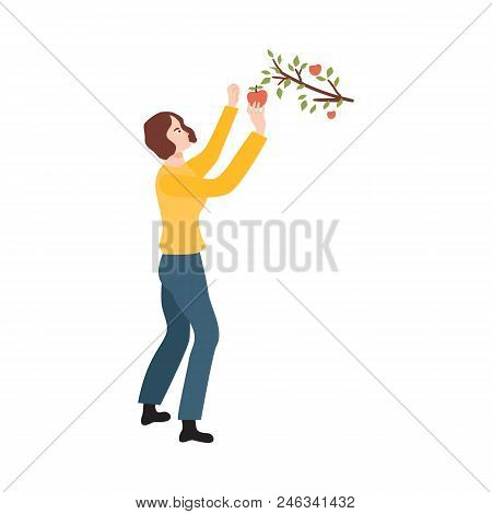 Flat Farmer Woman In Professional Uniform - Rubber Boots, Overalls, Collecting Apples From Tree. Agr