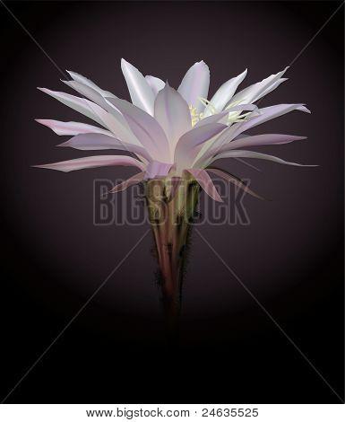 Cactus flower painting