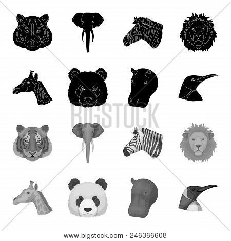 Panda, Giraffe, Hippopotamus, Penguin, Realistic Animals Set Collection Icons In Black, Monochrome S