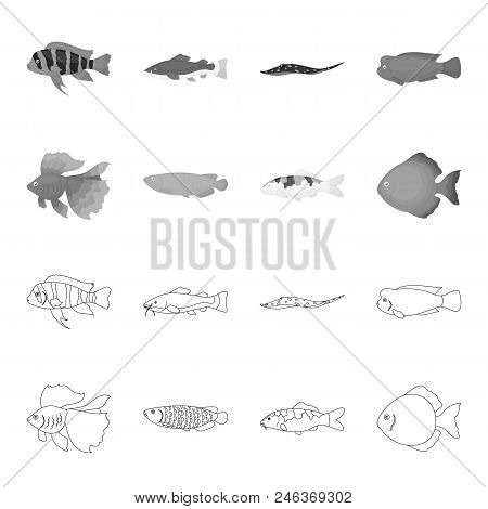 Discus, Gold, Carp, Koi, Scleropages, Fotmosus.fish Set Collection Icons In Outline, Monochrome Styl