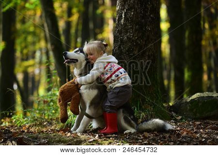 Girl In Park With Dog Husky. Girl With Siberian Husky. Delightful Girl Plays With Siberian Husky. Gi