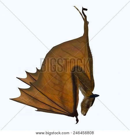 Icaronycteris Bat Hanging 3d Illustration - Icaronycteris Index Is The First Bat Known To Science An