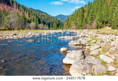 Wild Mountain River With Rocky Shore. Lovely Autumn Scenery Of Carpathian Nature Among The Ancient F