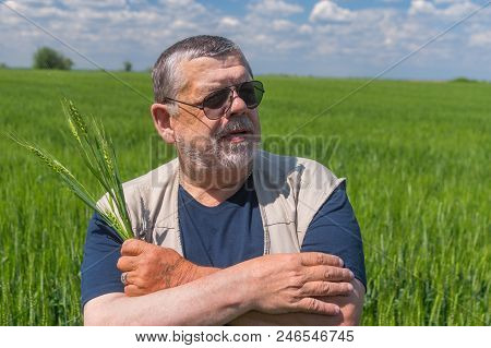 Nice Portrait Of Ukrainian Senior Farmer Standing Inside Unripe Crops Field And Taking Several Spike