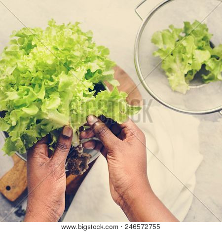 Closeup of hands holding organic green oak salad vegetable