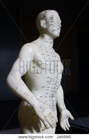 Acupuncture Model - Side