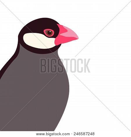 Java Rice Finch Head Vector Illustration Flat Style
