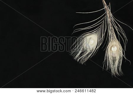 Black Dark Horizontal Background With Gentle Ivory Peacock Feathers, Lying Flat, Top View. Have An E