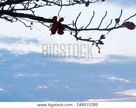 Light Bulbs Hanging On Silhouette Branch Tree Against With Blue Sky And White Cloud Background.