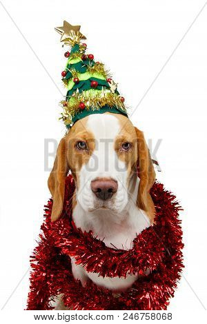 Beautiful Beagle Dog Girl In Christmas Tree Hat Isolated On White Background. Studio Shot. Copy Spac