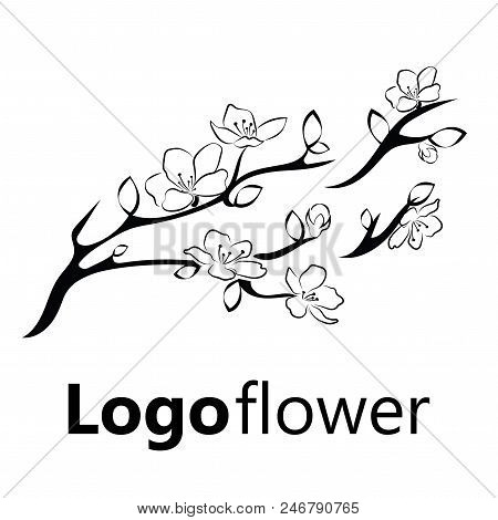 Blooming Cherry. Sakura Branch With Flower Buds. Black And White Drawing Of A Blossoming Tree In Spr