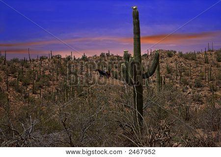 Scenic Desert Ride