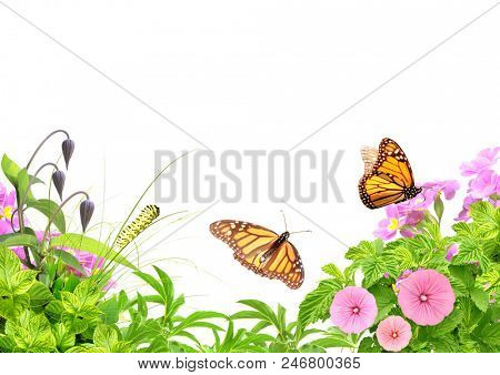 Summer frame with green leaves, flowers, caterpillar and butterflies. Isolated on white background. Copy space for text