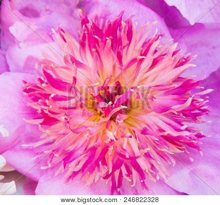A beautiful pink flower. Macro shot