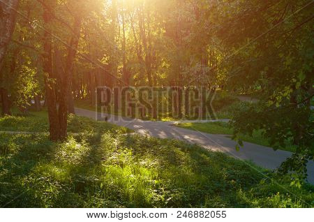 Picturesque sunny summer landscape - summer park alley at sunset. Colorful sunny summer landscape scene - summer sunlight breaking through the branches. Summer sunny nature