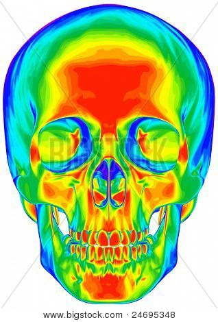 Thermal image of the human skull, isolated on white background. Bitmap copy my vector id 74035831